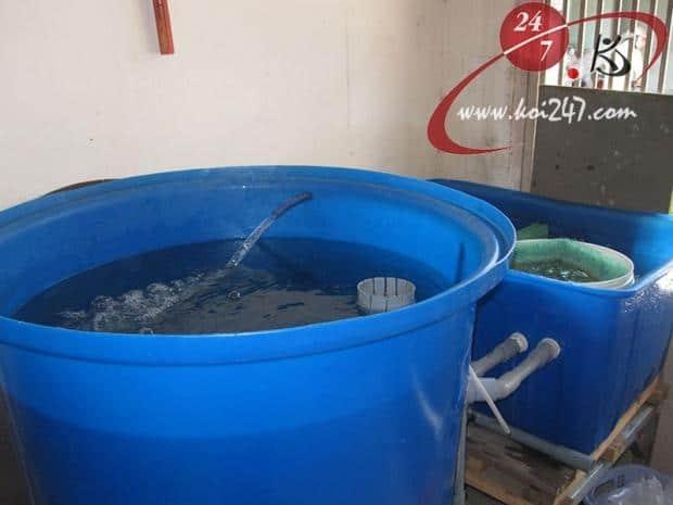 Một tank dưỡng bằng tank nhựa