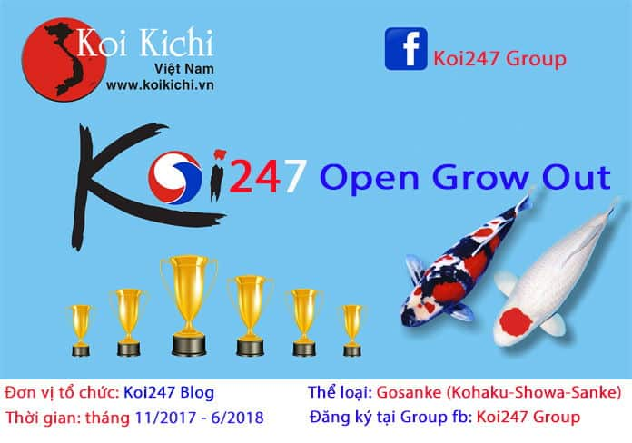 Koi247 Open Growth Out Contest