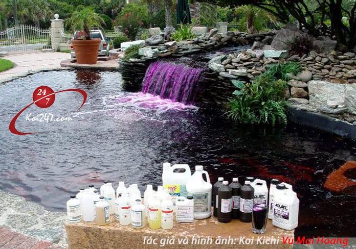 Hướng dẫn đánh thuốc tím vào hồ cá Koi