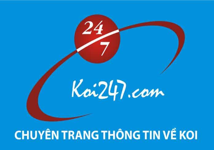 Giới thiệu Ban điều hành Koi247 Blog