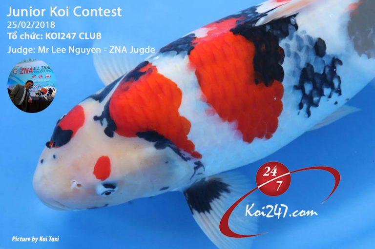 Junior Koi Contest 2018